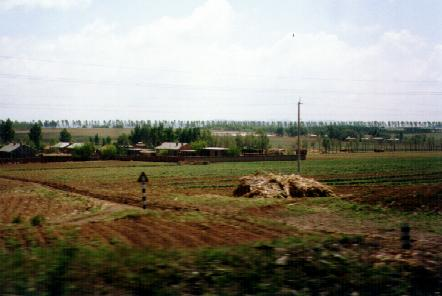 Wheat fields of Manchuria